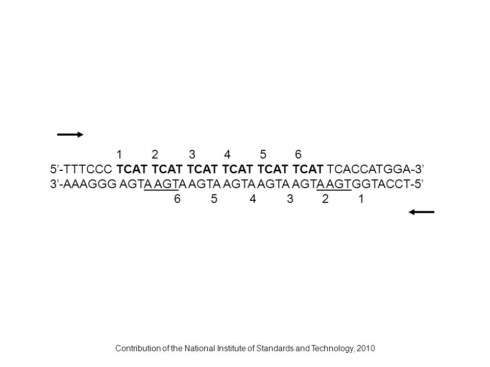 Contribution of the National Institute of Standards and Technology, 2010 1 2 3 4 56 5-TTTCCC TCAT TCAT TCAT TCAT TCAT TCAT TCACCATGGA-3 3-AAAGGG AGTA