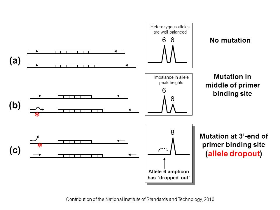 Contribution of the National Institute of Standards and Technology, 2010 * * 8 8 6 68 Allele 6 amplicon has dropped out Imbalance in allele peak heigh