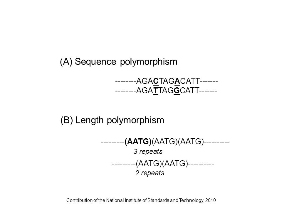 Contribution of the National Institute of Standards and Technology, 2010 2 repeats 3 repeats --------AGACTAGACATT------- --------AGATTAGGCATT------- -