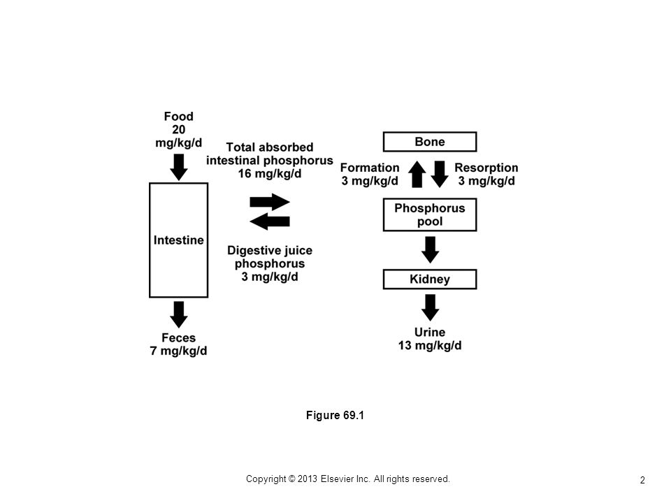 2 Figure 69.1 Copyright © 2013 Elsevier Inc. All rights reserved.
