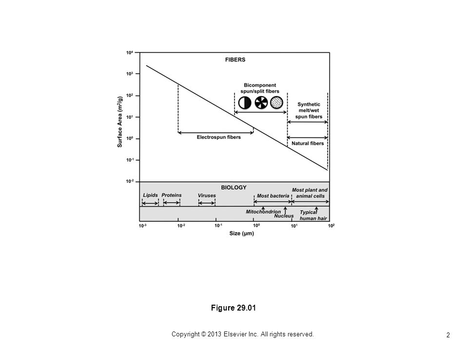 2 Copyright © 2013 Elsevier Inc. All rights reserved. Figure 29.01