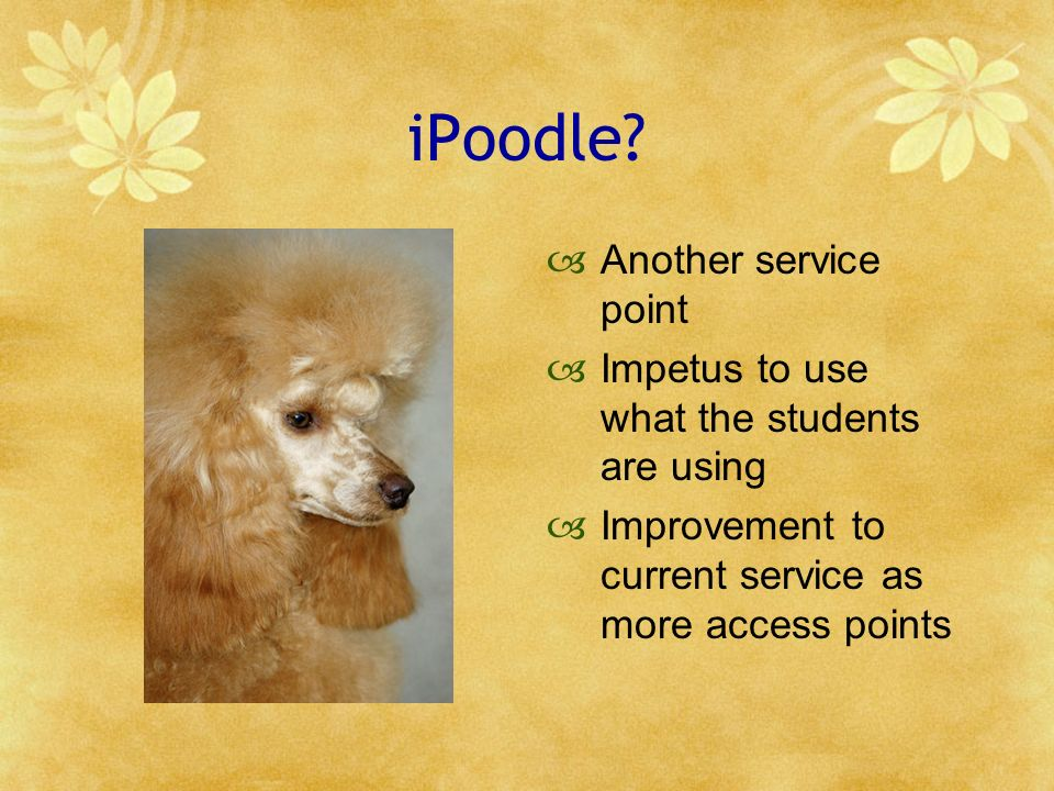 iPoodle? Another service point Impetus to use what the students are using Improvement to current service as more access points