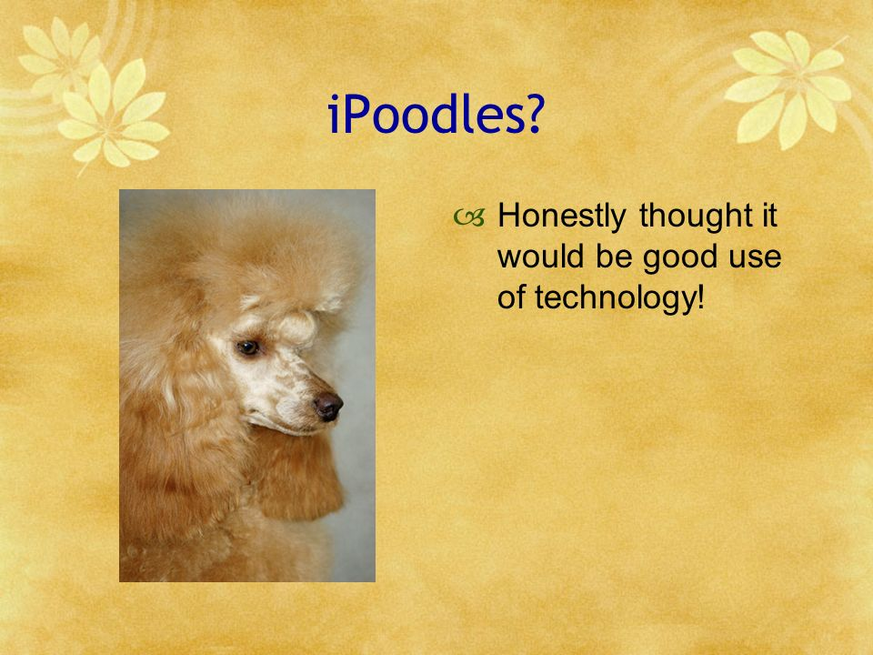 iPoodles? Honestly thought it would be good use of technology!