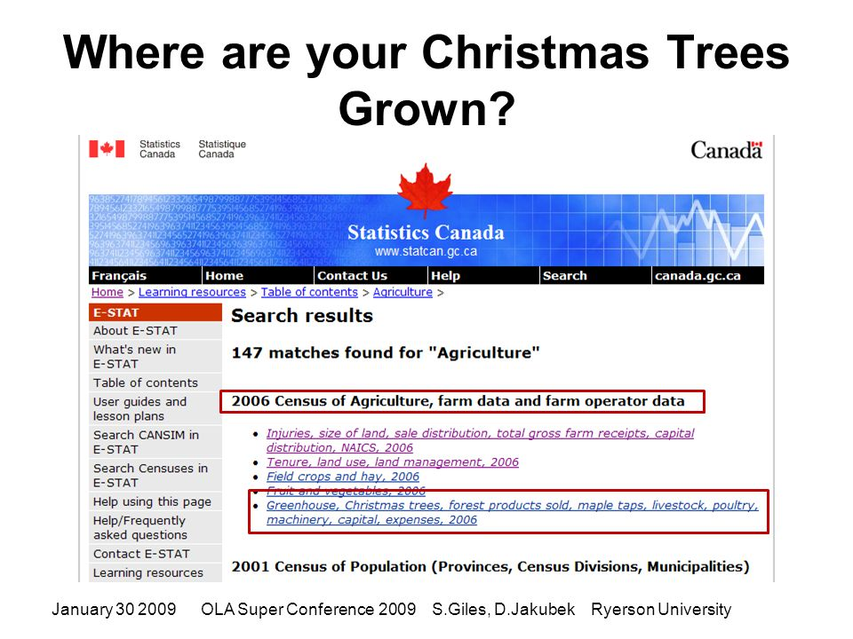 Where are your Christmas Trees Grown.