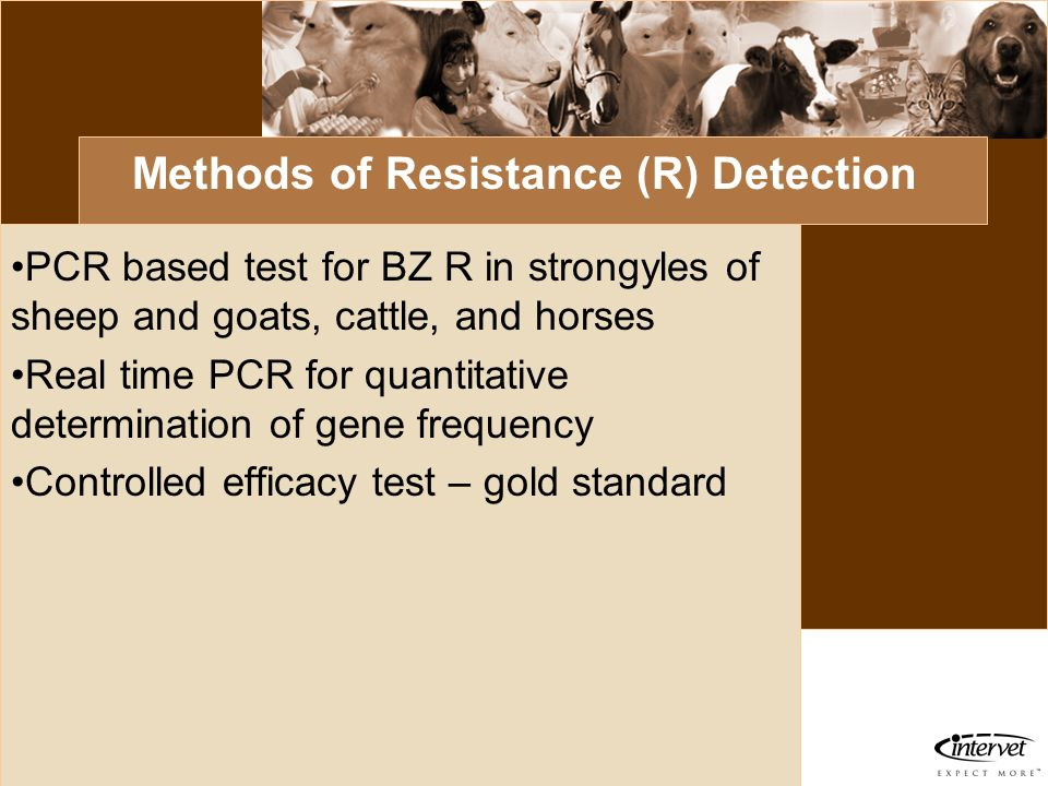 Introduction Methods of Resistance (R) Detection PCR based test for BZ R in strongyles of sheep and goats, cattle, and horses Real time PCR for quanti