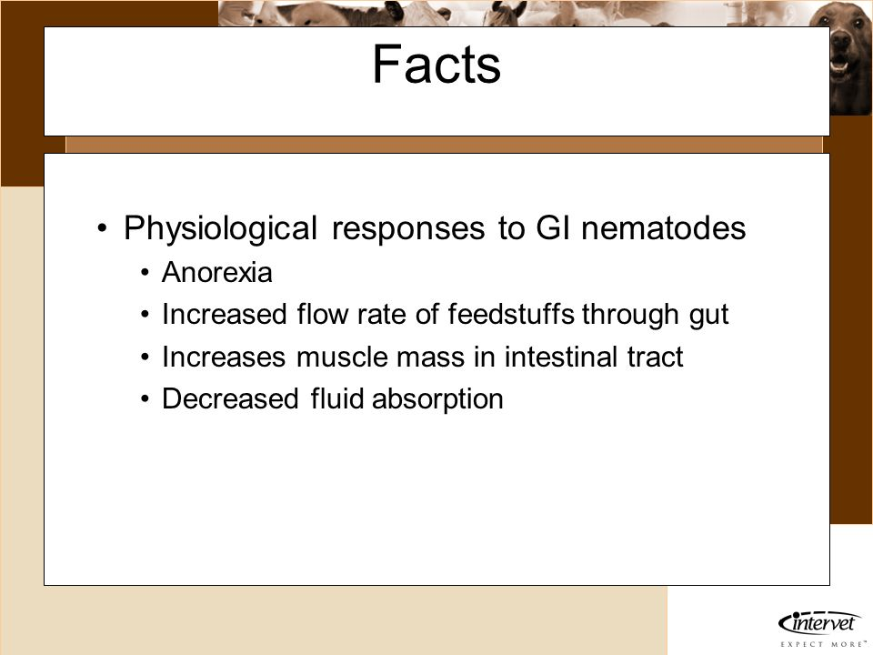 Introduction Facts Physiological responses to GI nematodes Anorexia Increased flow rate of feedstuffs through gut Increases muscle mass in intestinal