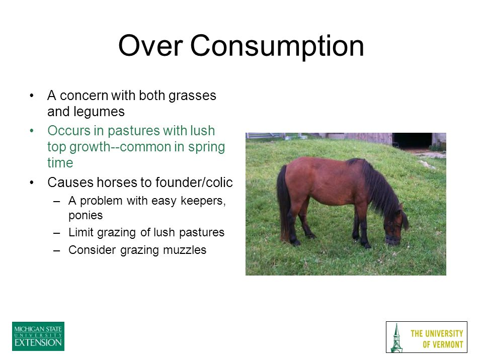 Over Consumption A concern with both grasses and legumes Occurs in pastures with lush top growth--common in spring time Causes horses to founder/colic –A problem with easy keepers, ponies –Limit grazing of lush pastures –Consider grazing muzzles