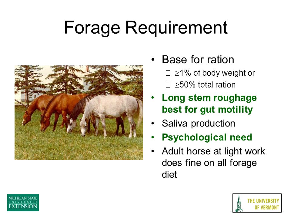 Forage Requirement Base for ration – 1% of body weight or – 50% total ration Long stem roughage best for gut motility Saliva production Psychological need Adult horse at light work does fine on all forage diet