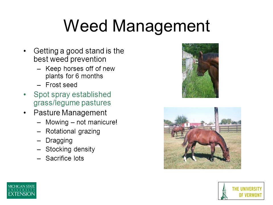 Weed Management Getting a good stand is the best weed prevention –Keep horses off of new plants for 6 months –Frost seed Spot spray established grass/legume pastures Pasture Management –Mowing – not manicure.