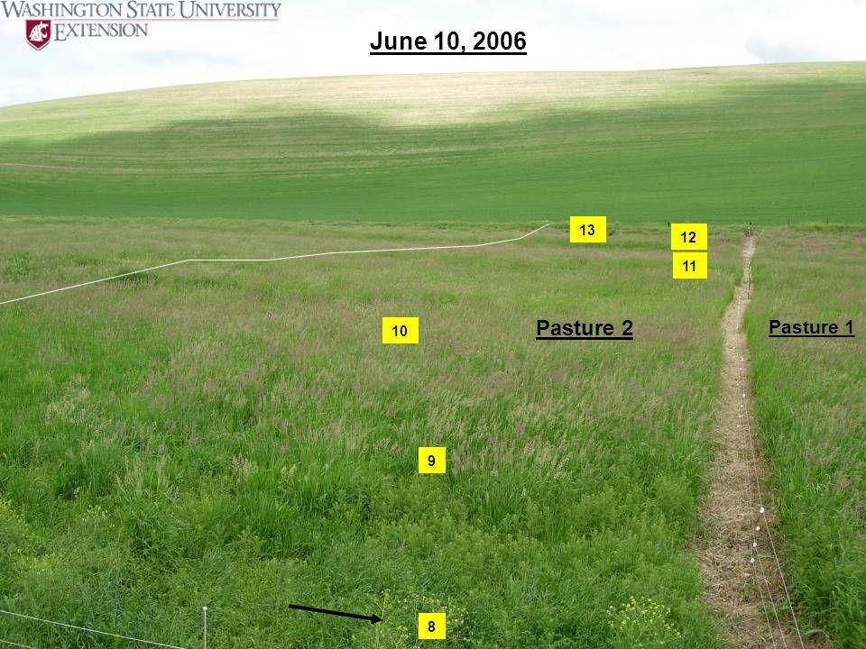 June 10, 2006 Pasture 2 Pasture 1 8 9 10 11 12 13