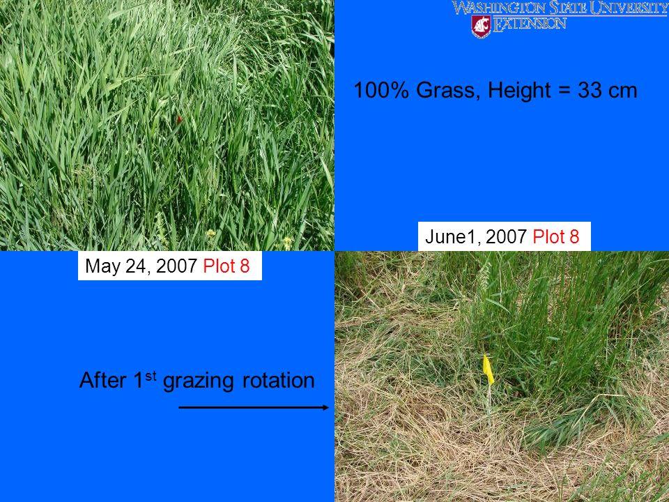 May 24, 2007 Plot 8 June1, 2007 Plot 8 100% Grass, Height = 33 cm After 1 st grazing rotation