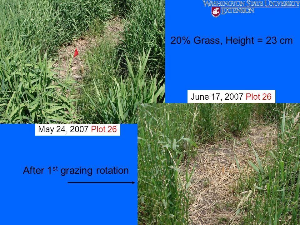 May 24, 2007 Plot 26 June 17, 2007 Plot 26 After 1 st grazing rotation 20% Grass, Height = 23 cm
