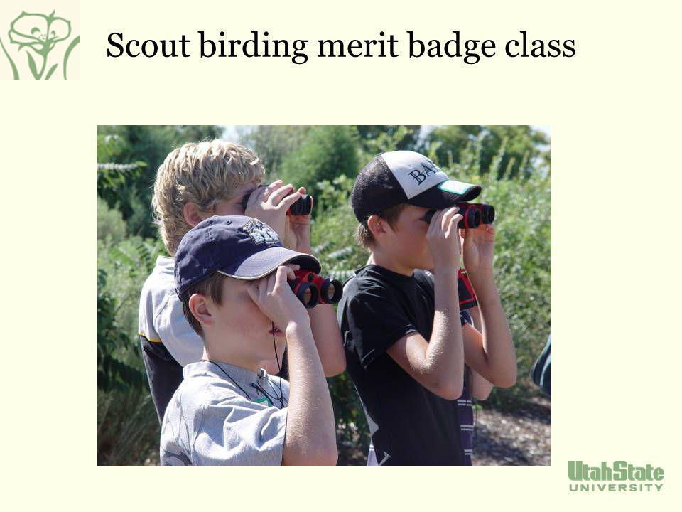 Scout birding merit badge class