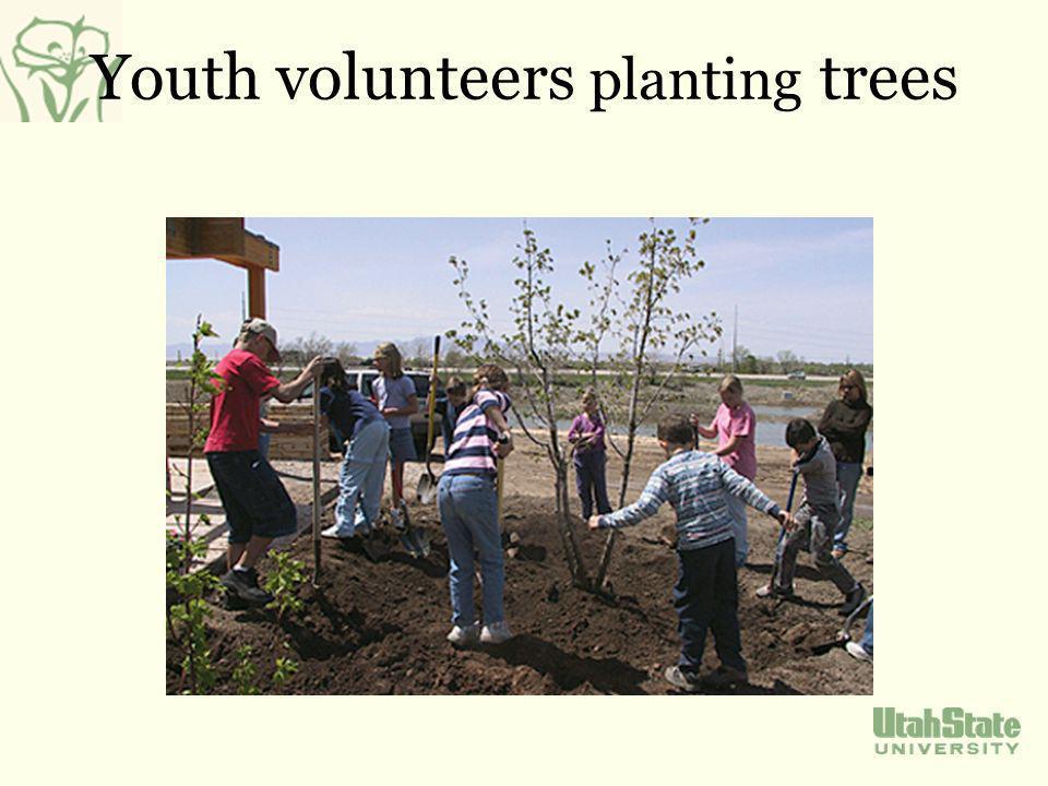 Youth volunteers planting trees