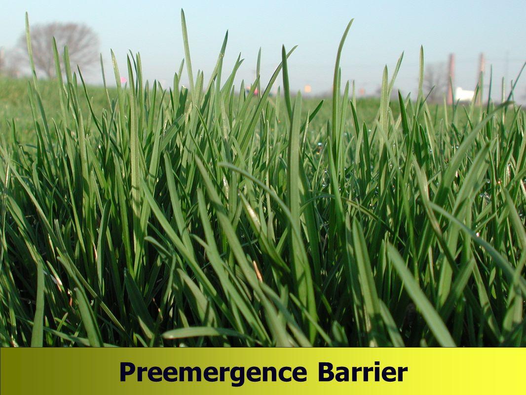 Preemergence Barrier