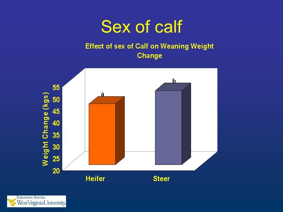 Sex of calf