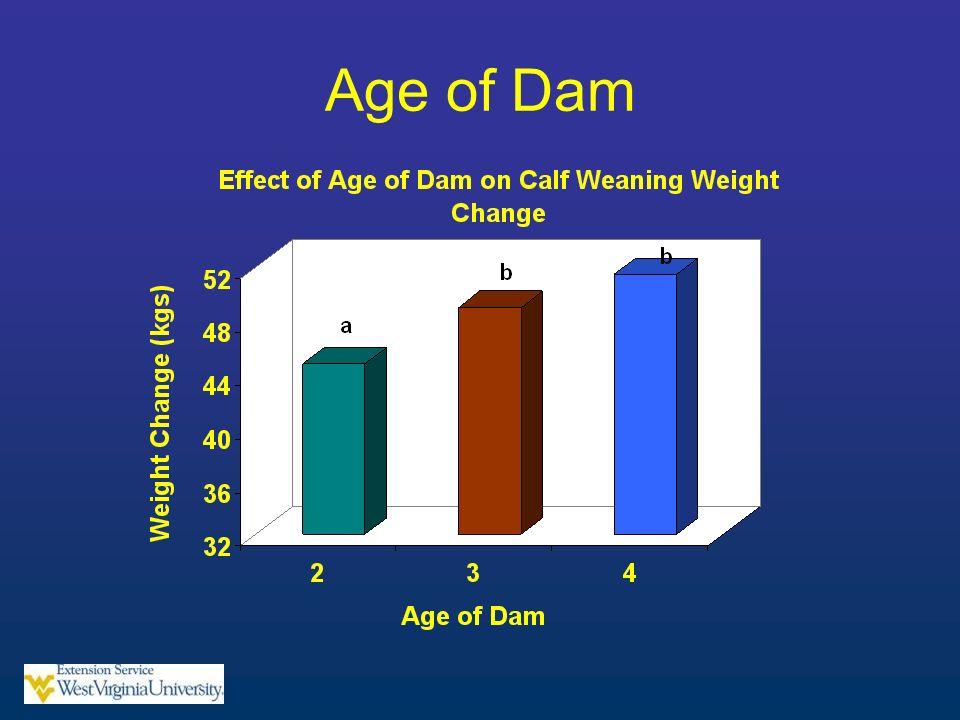 Age of Dam