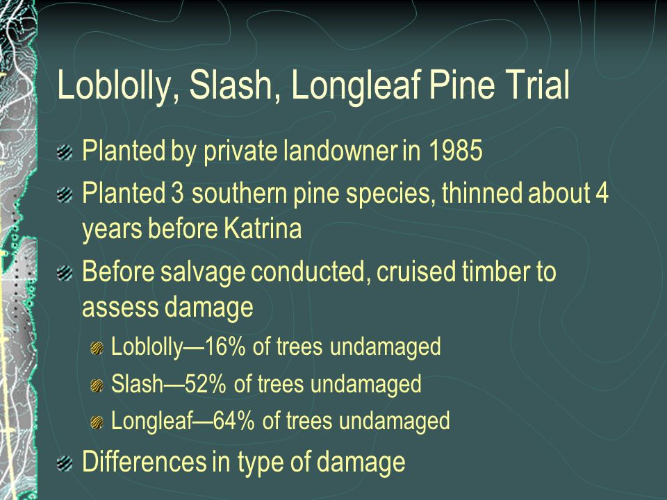 Loblolly, Slash, Longleaf Pine Trial Planted by private landowner in 1985 Planted 3 southern pine species, thinned about 4 years before Katrina Before salvage conducted, cruised timber to assess damage Loblolly16% of trees undamaged Slash52% of trees undamaged Longleaf64% of trees undamaged Differences in type of damage