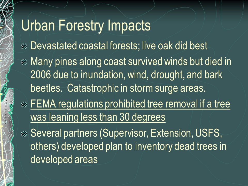 Urban Forestry Impacts Devastated coastal forests; live oak did best Many pines along coast survived winds but died in 2006 due to inundation, wind, drought, and bark beetles.