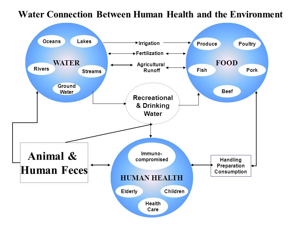Water Connection Between Human Health and the Environment WATER Oceans Streams Rivers FOOD Produce PorkFish Poultry Beef HUMAN HEALTH ElderlyChildren Immuno- compromised Agricultural Runoff Handling Preparation Consumption Irrigation Fertilization Animal & Human Feces Recreational & Drinking Water Lakes Ground Water Health Care
