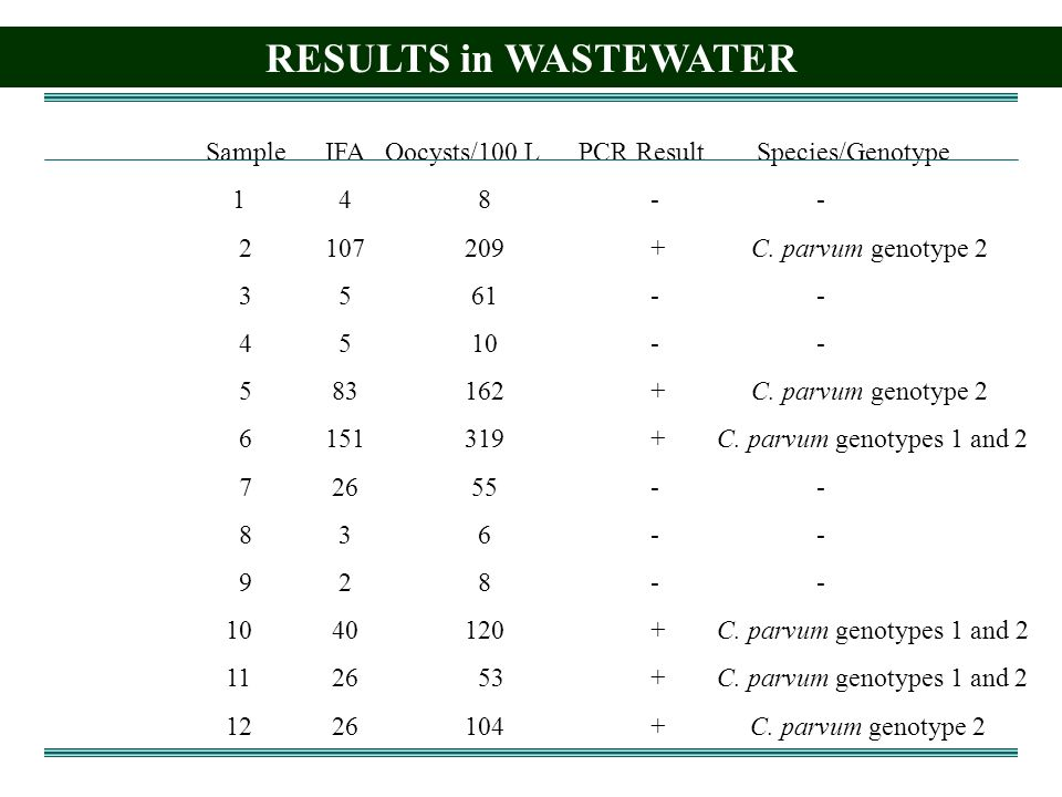 RESULTS in WASTEWATER Sample IFA Oocysts/100 L PCR Result Species/Genotype C.
