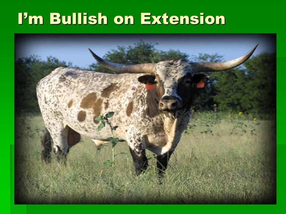 Im Bullish on Extension