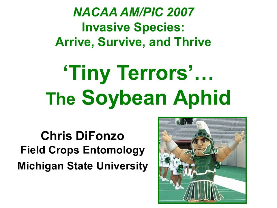 NACAA AM/PIC 2007 Invasive Species: Arrive, Survive, and Thrive Chris DiFonzo Field Crops Entomology Michigan State University Tiny Terrors… The Soybean Aphid