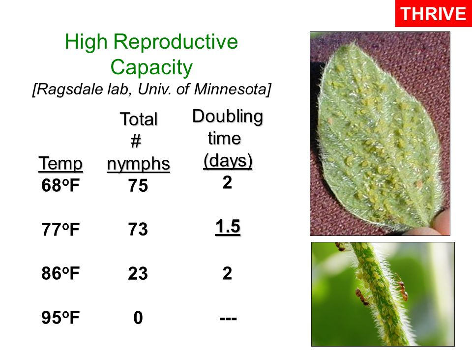 High Reproductive Capacity [Ragsdale lab, Univ.
