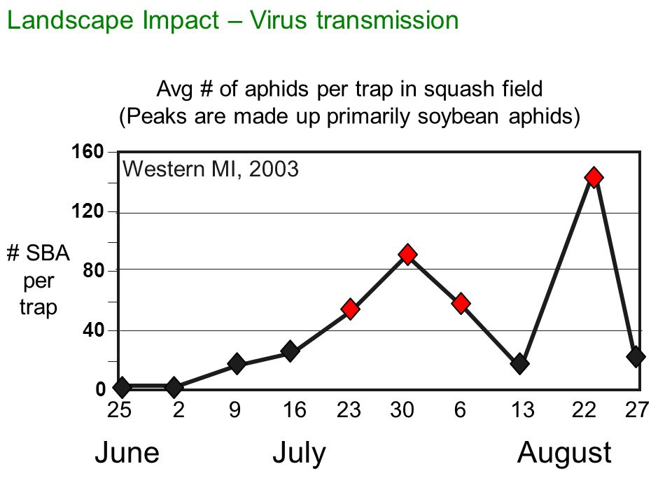 Landscape Impact – Virus transmission Avg # of aphids per trap in squash field (Peaks are made up primarily soybean aphids) 0 40 80 120 160 JuneJulyAugust 25923622272163013 Western MI, 2003 # SBA per trap