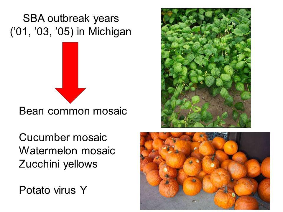 SBA outbreak years (01, 03, 05) in Michigan Bean common mosaic Cucumber mosaic Watermelon mosaic Zucchini yellows Potato virus Y