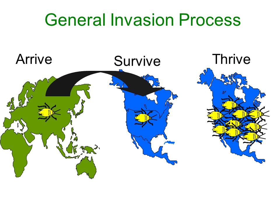 General Invasion Process Arrive Survive Thrive