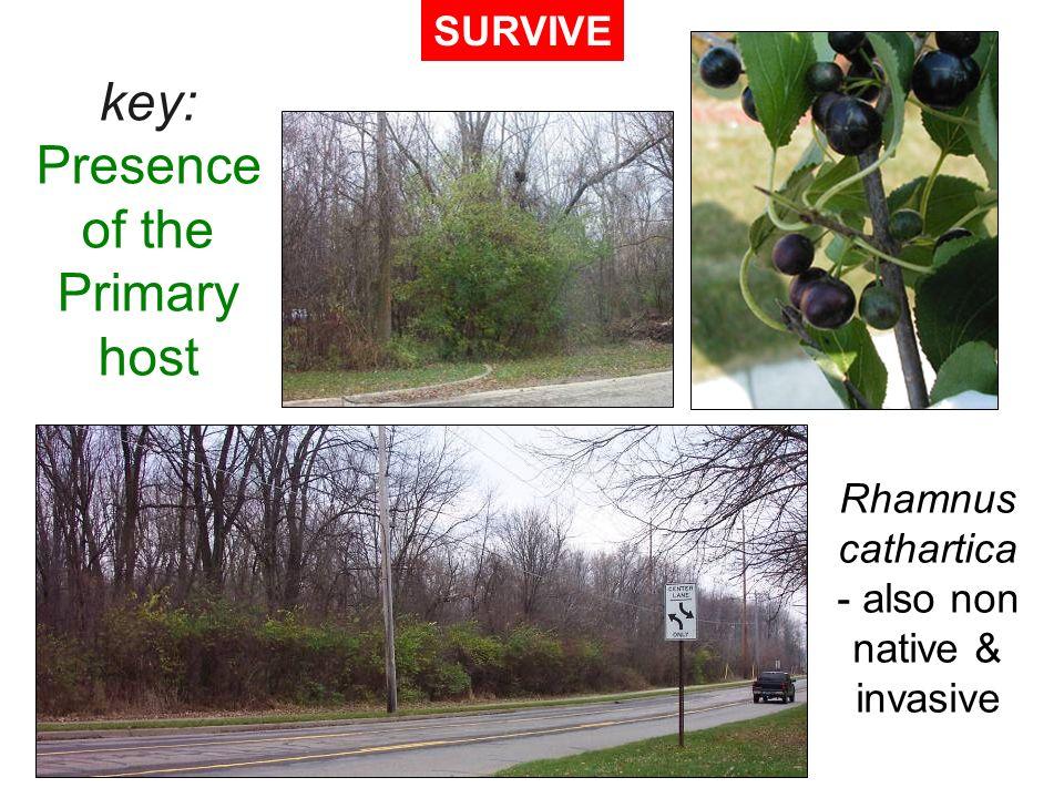 key: Presence of the Primary host Rhamnus cathartica - also non native & invasive SURVIVE