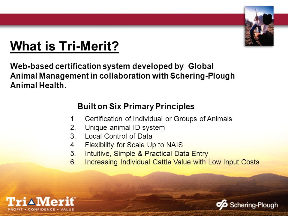 What is Tri-Merit.