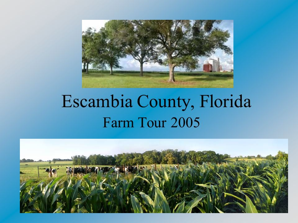 Escambia County, Florida 661 square miles, or 420,480 acres, with an additional 64,000 acres of water area Population of 296,709 Less than 15,000 are considered to farm shares of the total population 45,000 acres farmed 250,000 acres of timberland 10,000 acres of native and improved pastures
