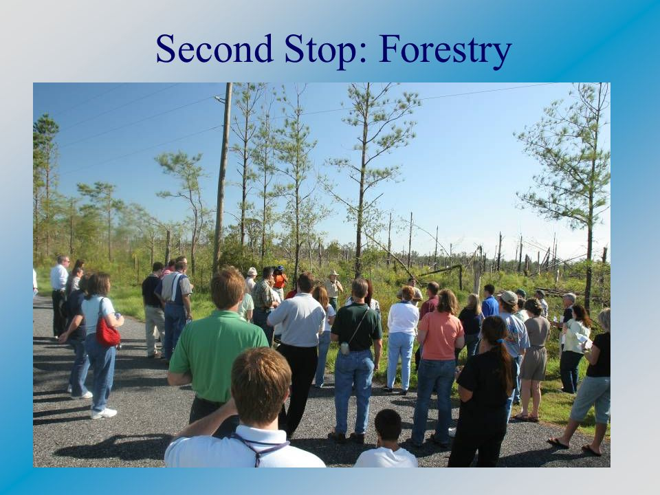 Second Stop: Forestry