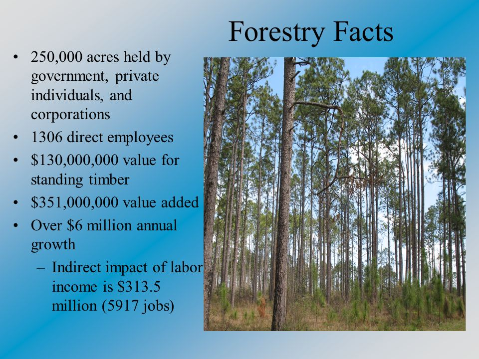 Forestry Facts 250,000 acres held by government, private individuals, and corporations 1306 direct employees $130,000,000 value for standing timber $351,000,000 value added Over $6 million annual growth –Indirect impact of labor income is $313.5 million (5917 jobs)