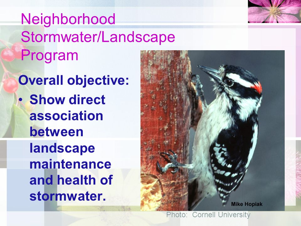 Objectives: Increase knowledge in proper landscape maintenance Irrigation – Time of day – Days of week – Amount
