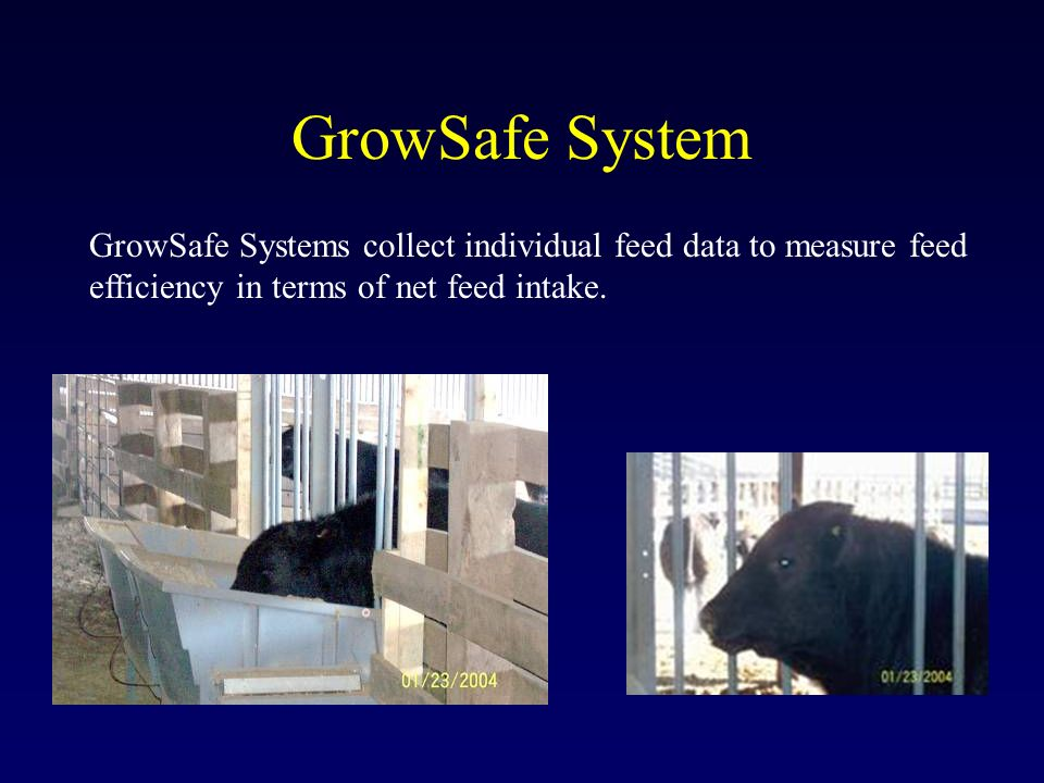 GrowSafe System GrowSafe Systems collect individual feed data to measure feed efficiency in terms of net feed intake.
