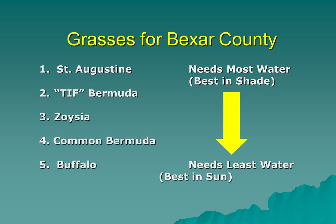 Grasses for Bexar County 1. St.
