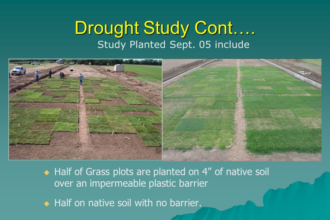 Drought Study Cont…. Half of Grass plots are planted on 4 of native soil over an impermeable plastic barrier Half on native soil with no barrier. Stud