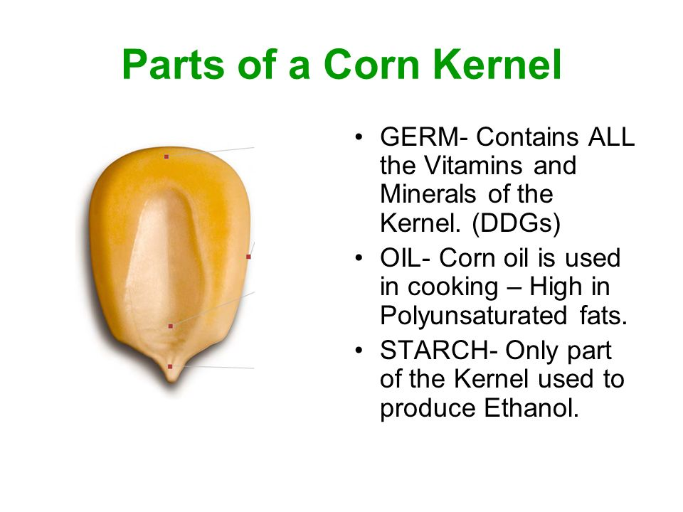 Parts of a Corn Kernel GERM- Contains ALL the Vitamins and Minerals of the Kernel.