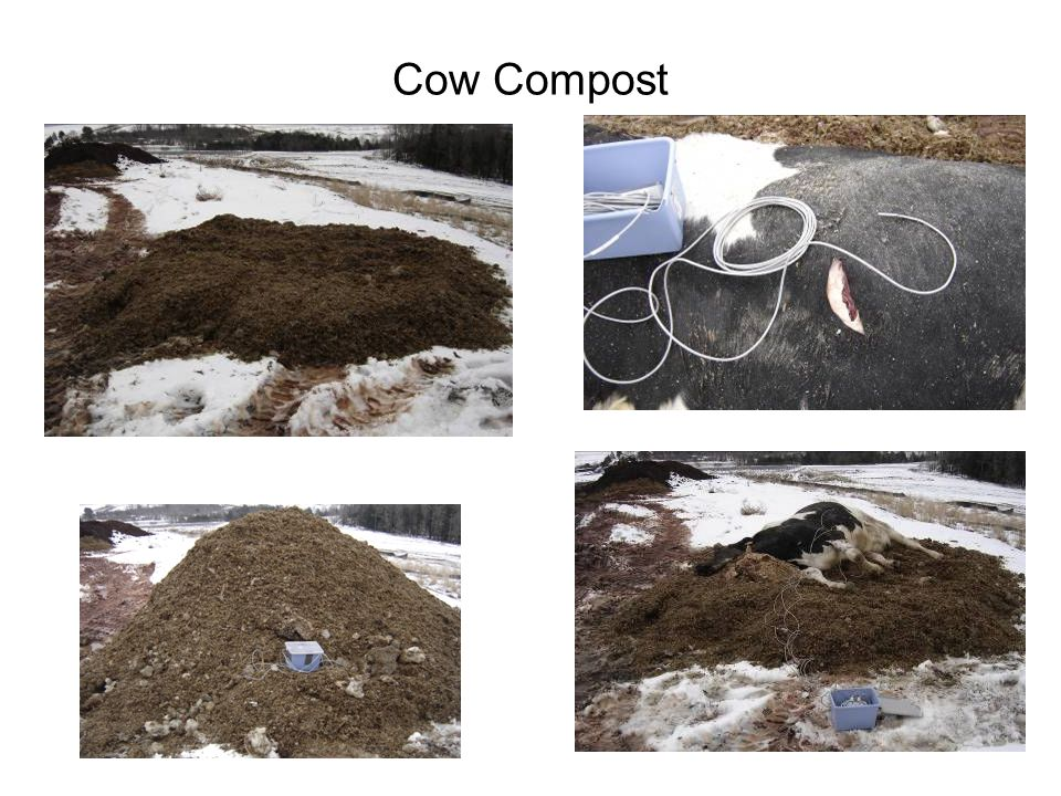 Cow Compost