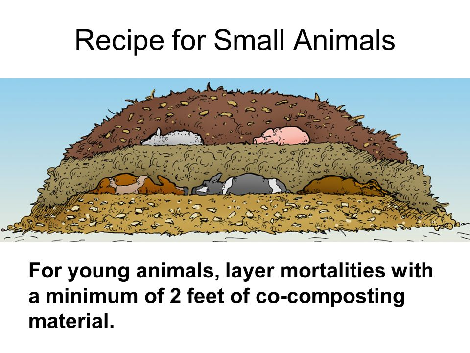 Recipe for Small Animals For young animals, layer mortalities with a minimum of 2 feet of co-composting material.