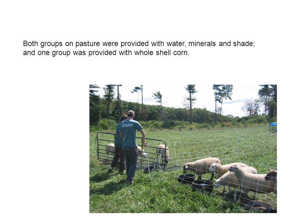 Both groups on pasture were provided with water, minerals and shade; and one group was provided with whole shell corn.