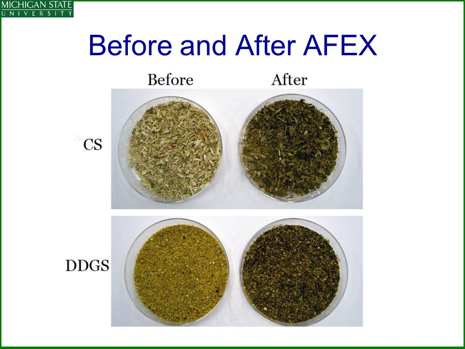 Before and After AFEX