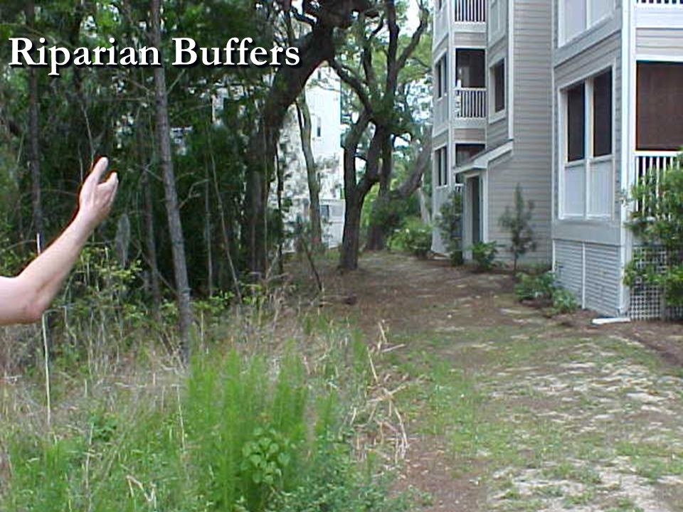 Riparian Buffers