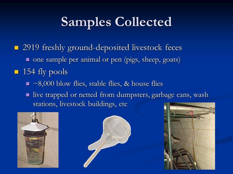 Samples Collected 2919 freshly ground-deposited livestock feces 2919 freshly ground-deposited livestock feces one sample per animal or pen (pigs, sheep, goats) one sample per animal or pen (pigs, sheep, goats) 154 fly pools 154 fly pools ~8,000 blow flies, stable flies, & house flies ~8,000 blow flies, stable flies, & house flies live trapped or netted from dumpsters, garbage cans, wash stations, livestock buildings, etc live trapped or netted from dumpsters, garbage cans, wash stations, livestock buildings, etc