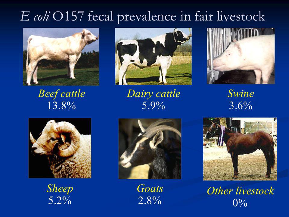 E coli O157 fecal prevalence in fair livestock Beef cattle 13.8% Dairy cattle 5.9% Sheep 5.2% Goats 2.8% Swine 3.6% Other livestock 0%