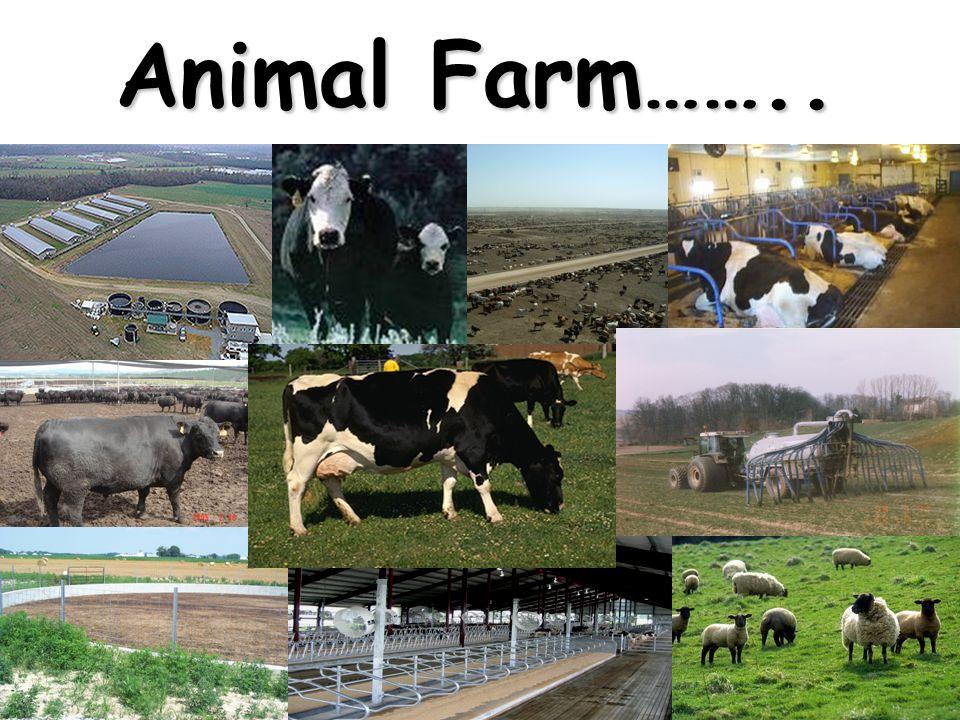 Animal Farm……..