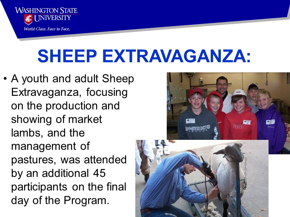 SHEEP EXTRAVAGANZA: A youth and adult Sheep Extravaganza, focusing on the production and showing of market lambs, and the management of pastures, was attended by an additional 45 participants on the final day of the Program.